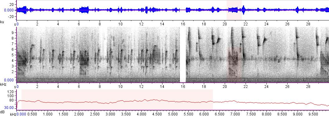 Sonogram of recording #AV 10230