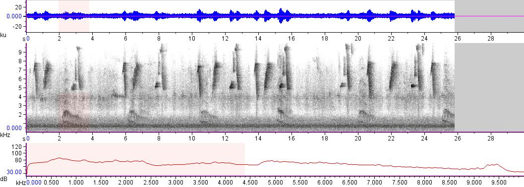 Sonogram of recording #AV 10236