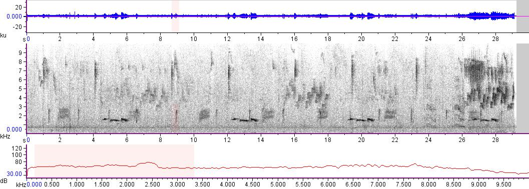 Sonogram of recording #AV 10245