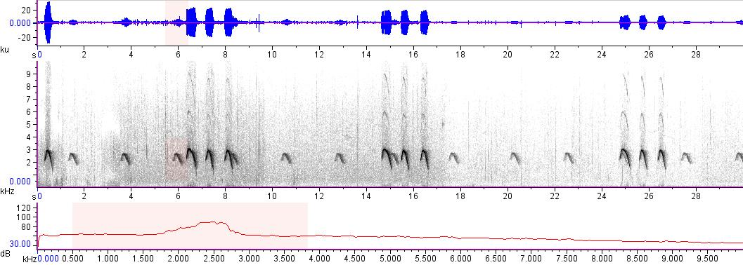 Sonogram of recording #AV 10251