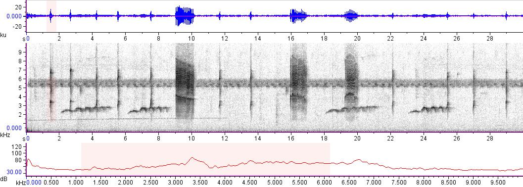 Sonogram of recording #AV 10270