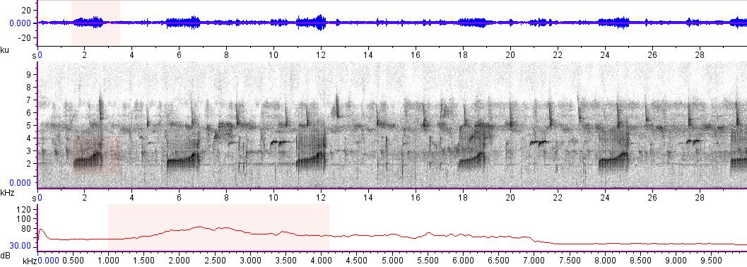 Sonogram of recording #AV 10276
