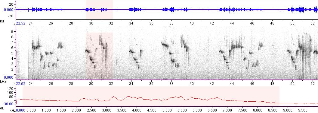 Sonogram of recording #AV 10317