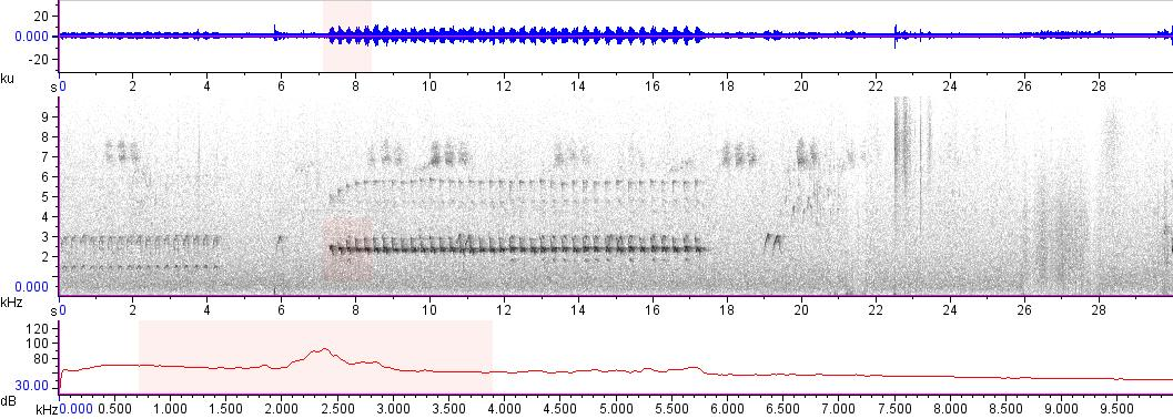 Sonogram of recording #AV 10330