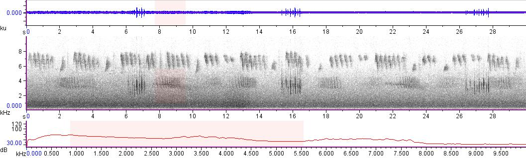 Sonogram of recording #AV 10334