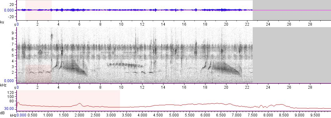 Sonogram of recording #AV 10359