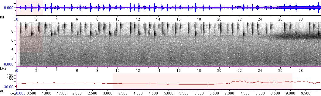 Sonogram of recording #AV 10386