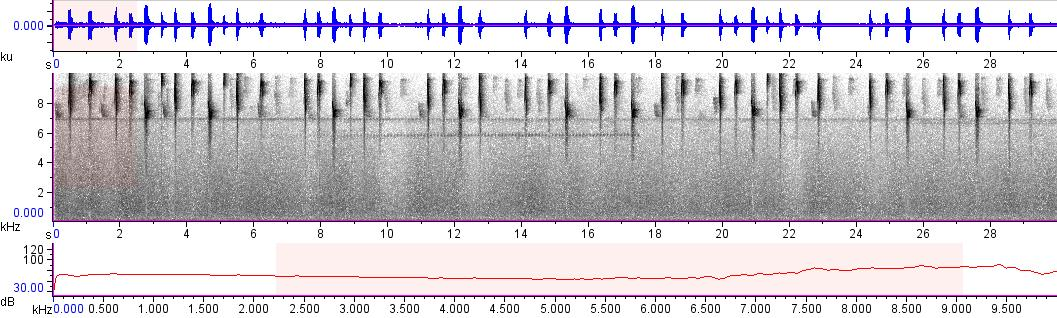 Sonogram of recording #AV 10387