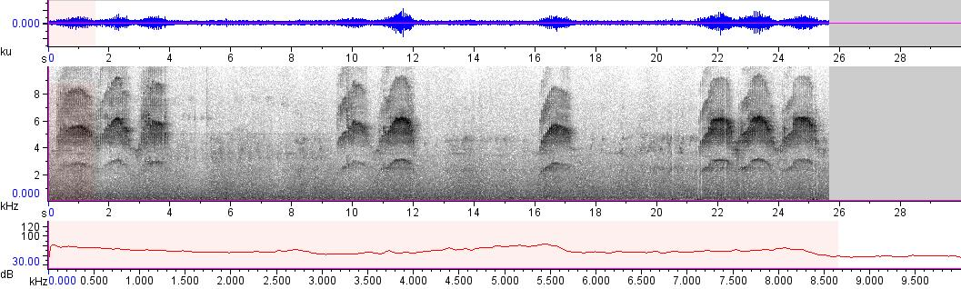 Sonogram of recording #AV 10389