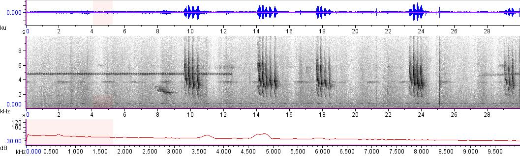Sonogram of recording #AV 10397