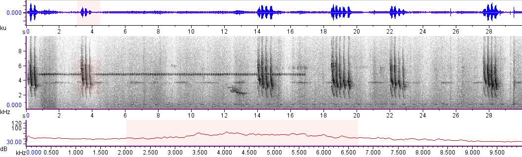 Sonogram of recording #AV 10398