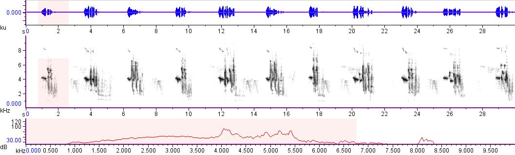 Sonogram of recording #AV 10403