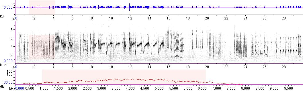 Sonogram of recording #AV 10412