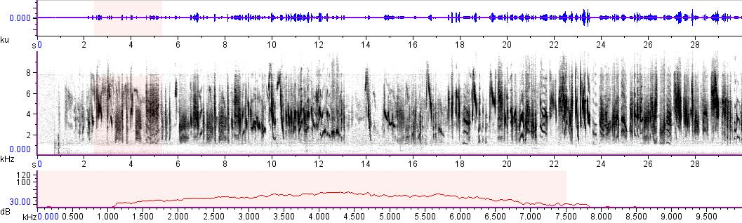 Sonogram of recording #AV 10416