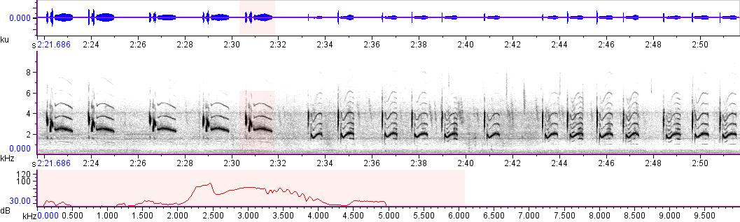 Sonogram of recording #AV 10428