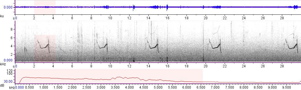 Sonogram of recording #AV 10457