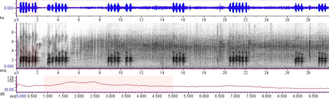 Sonogram of recording #AV 10465