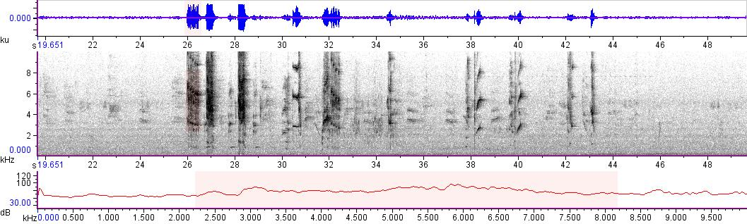 Sonogram of recording #AV 10466
