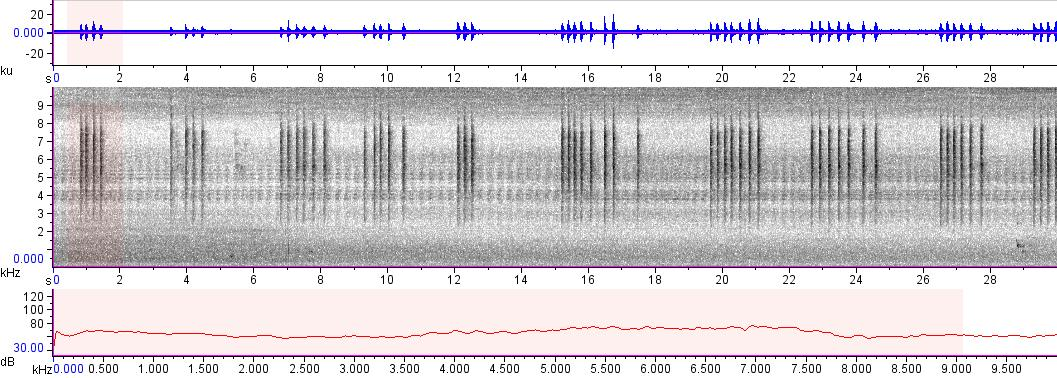Sonogram of recording #AV 10507