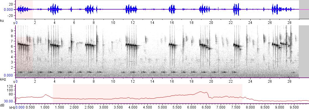 Sonogram of recording #AV 10508
