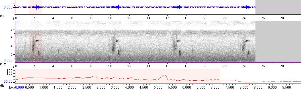Sonogram of recording #AV 10549
