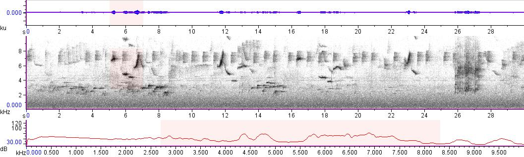 Sonogram of recording #AV 10559