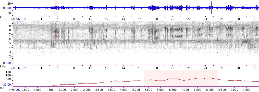 Sonogram of recording #AV 10644