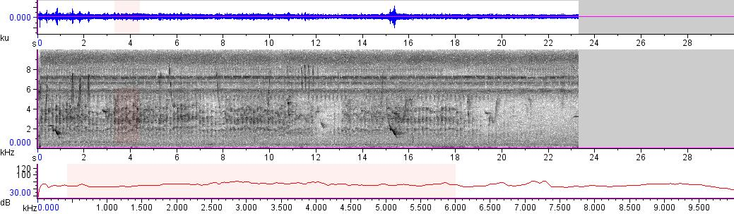 Sonogram of recording #AV 10651