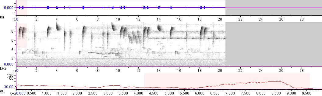 Sonogram of recording #AV 10676