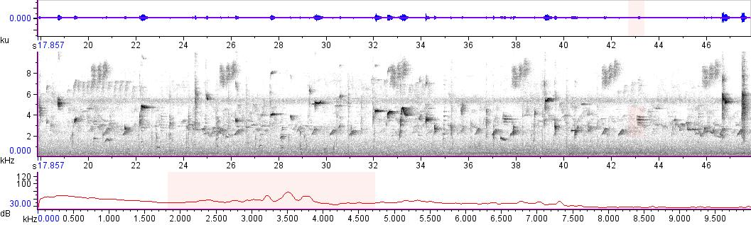 Sonogram of recording #AV 10678