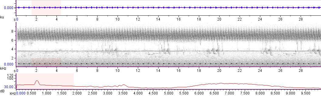 Sonogram of recording #AV 10695