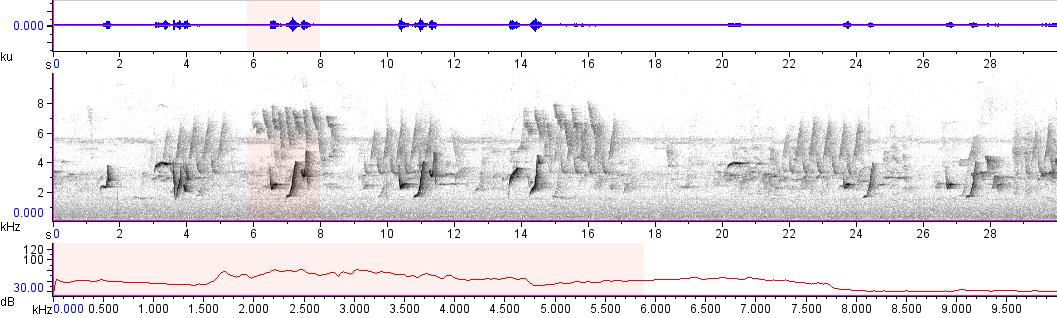 Sonogram of recording #AV 10710