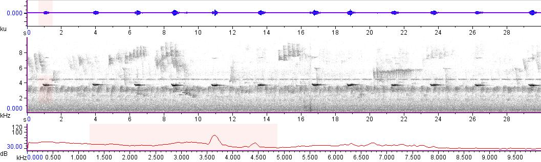 Sonogram of recording #AV 10713