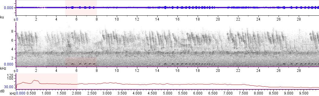 Sonogram of recording #AV 10721