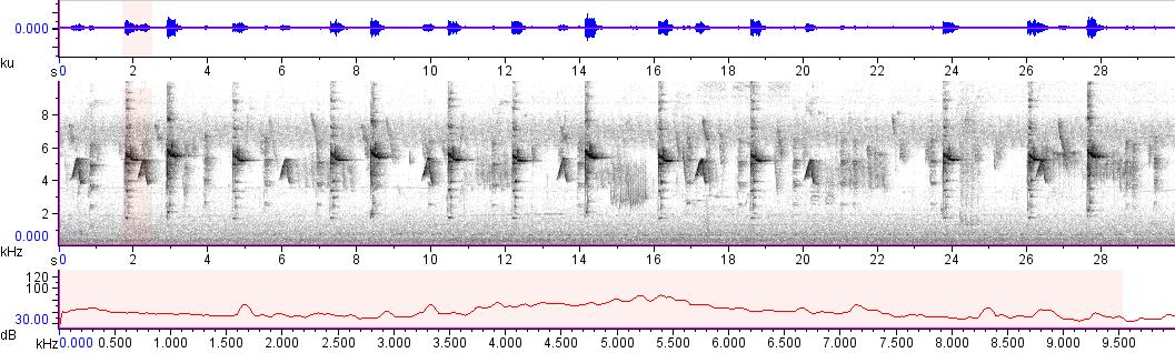 Sonogram of recording #AV 10734