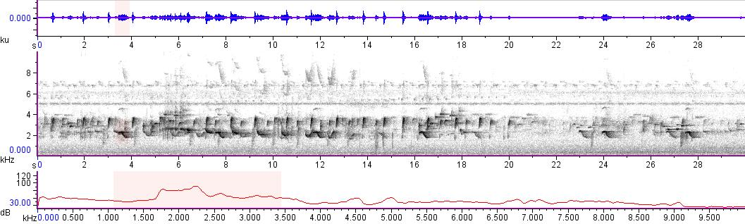 Sonogram of recording #AV 10747