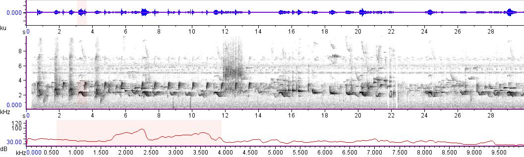 Sonogram of recording #AV 10748