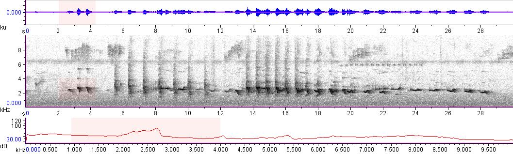 Sonogram of recording #AV 10750