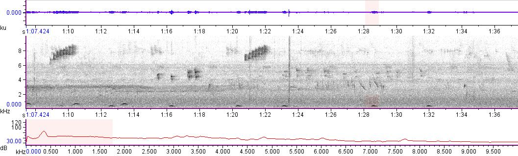Sonogram of recording #AV 10771