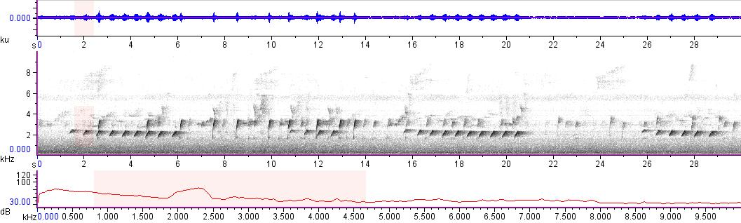 Sonogram of recording #AV 10777