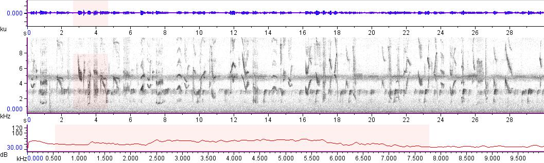 Sonogram of recording #AV 10784