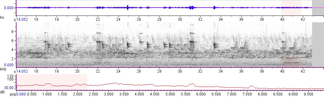 Sonogram of recording #AV 10788