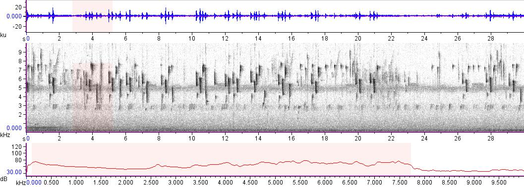 Sonogram of recording #AV 10811