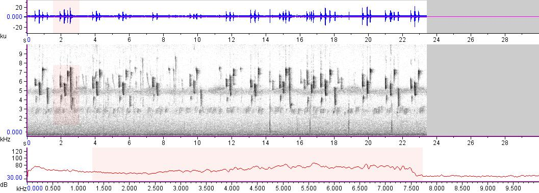 Sonogram of recording #AV 10812