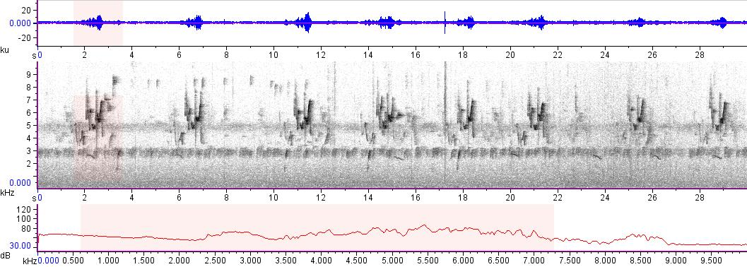 Sonogram of recording #AV 10814