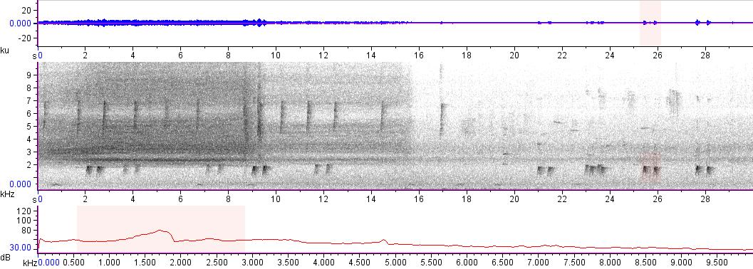 Sonogram of recording #AV 10816