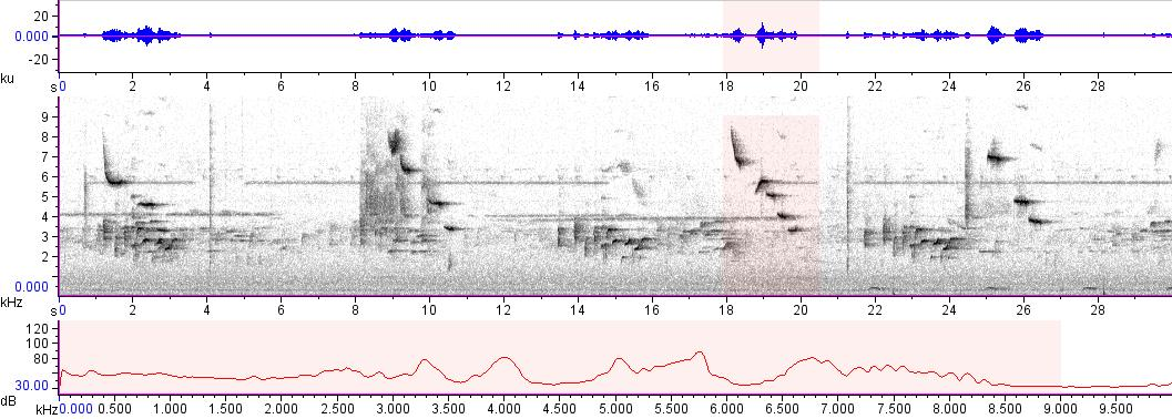 Sonogram of recording #AV 10819
