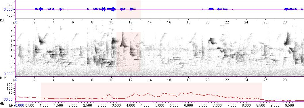 Sonogram of recording #AV 10820