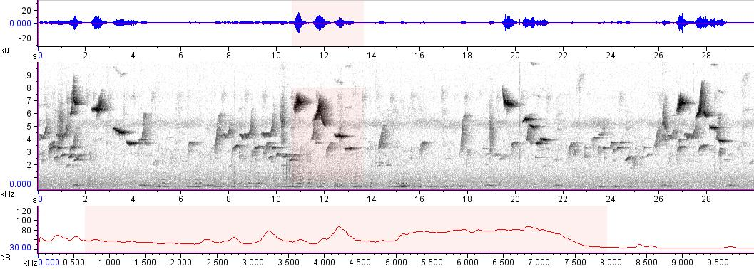 Sonogram of recording #AV 10821