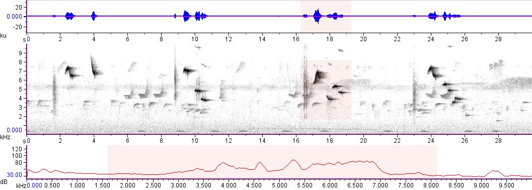 Sonogram of recording #AV 10822